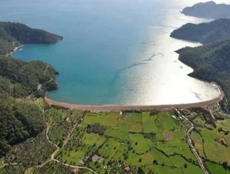 Denize Sıfır 49000M2 Turizm İmarlı Satılık 5 Yıldızlı Otel Arsası Satılık