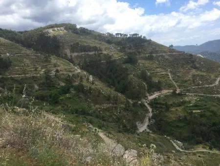 Muğla Akbük Koyunda Zeytinköy Mahallesinde 1000 M2 Yatırım Amaçlı Kelepir Satılık Arsa